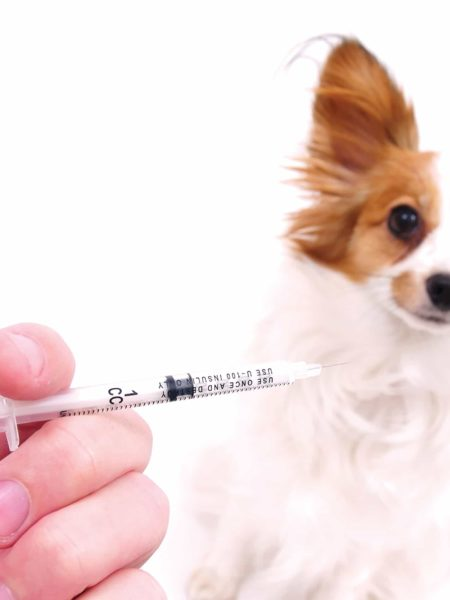 Servicio Integral Sanitario - Perros